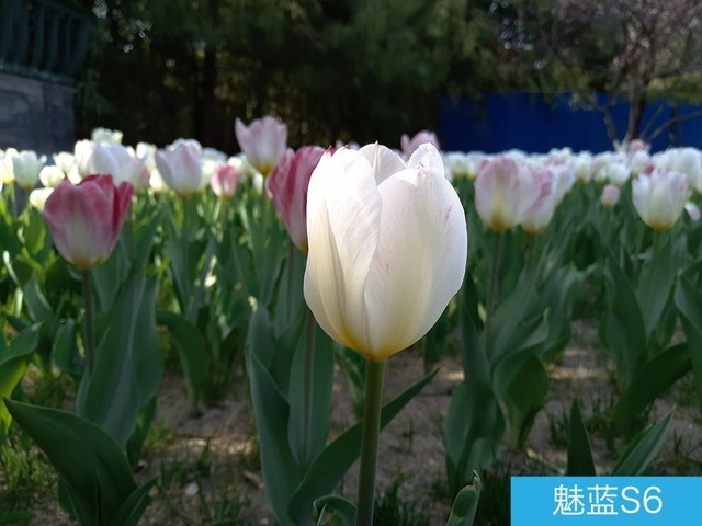 坚果3、荣耀畅玩7C、魅蓝S6拍照样张对比 千元机拍照哪个好?