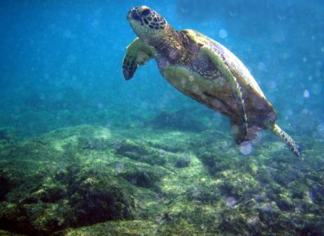 全球仅13%海洋未遭人类破坏:海洋野生动物都未受保护
