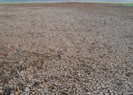 全球变暖可能导致土壤加速向大气释放二氧化碳