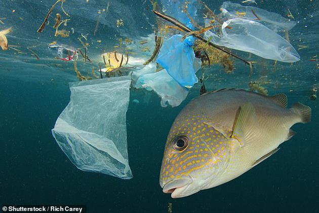 据估计,全世界的塑料制品有2%到5%最终会进入海洋。